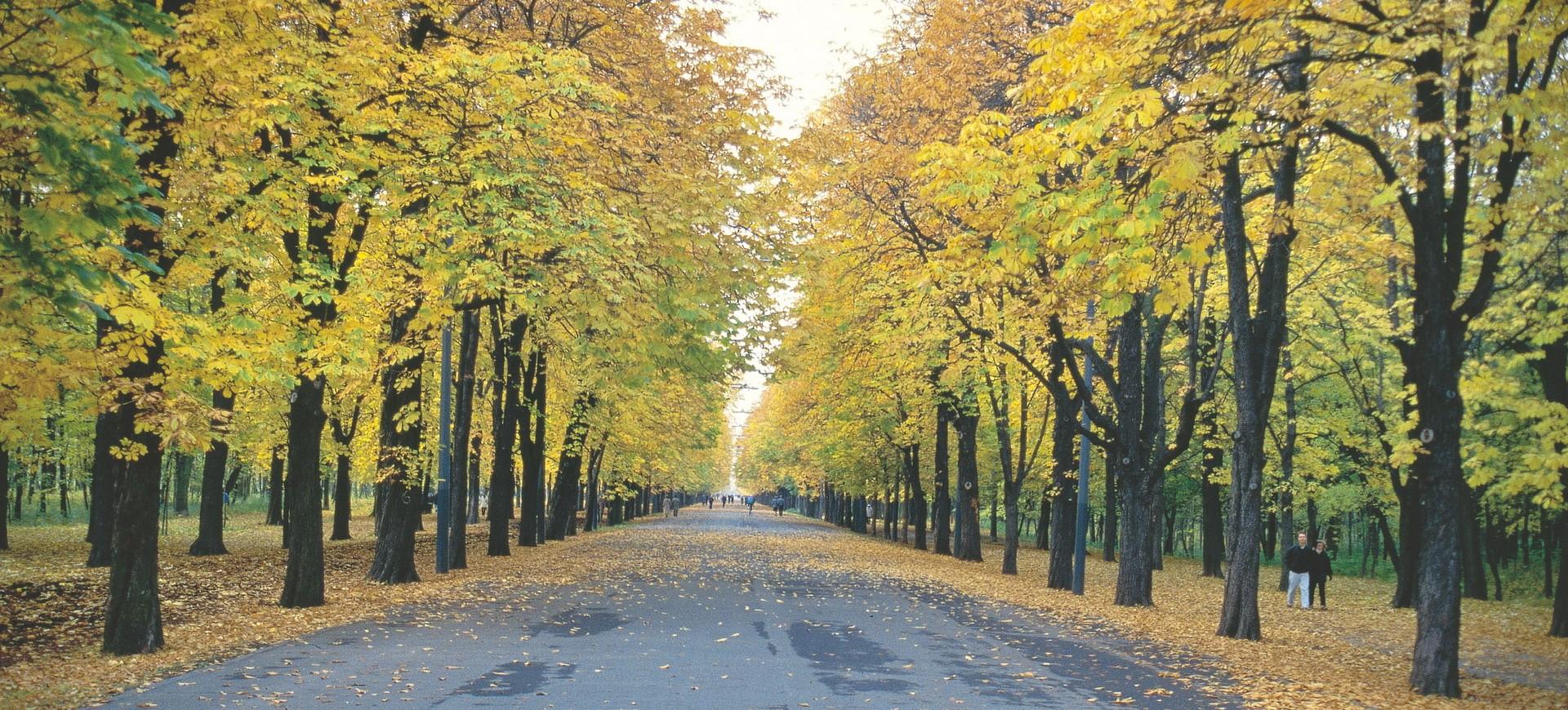 Autriche Vienne Prater Avenue en Automne