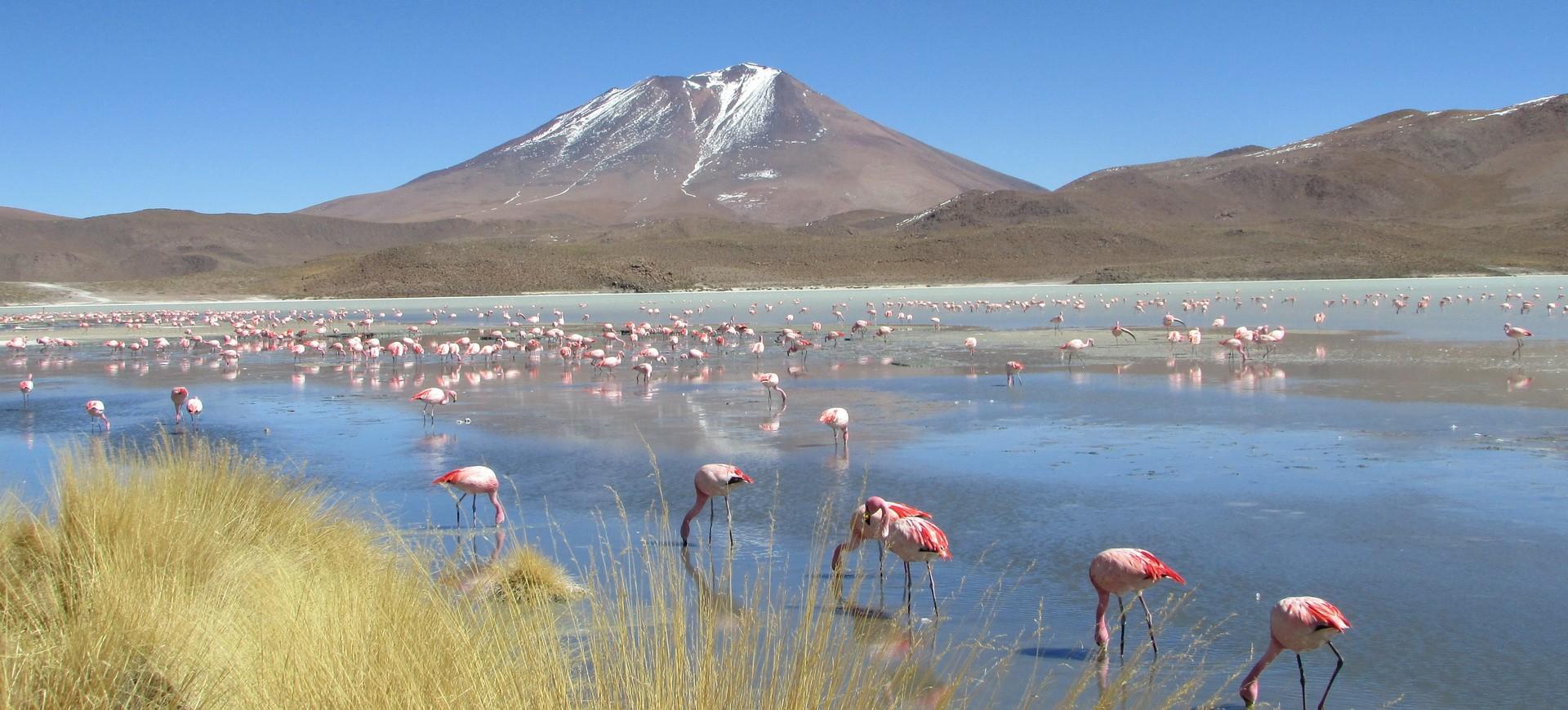 Flamants Rose dans la Laguna Hedionda en Bolivie