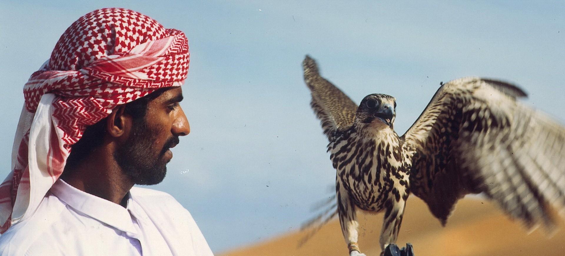 Aigle dans le désert aux Emirats Arabes Unis