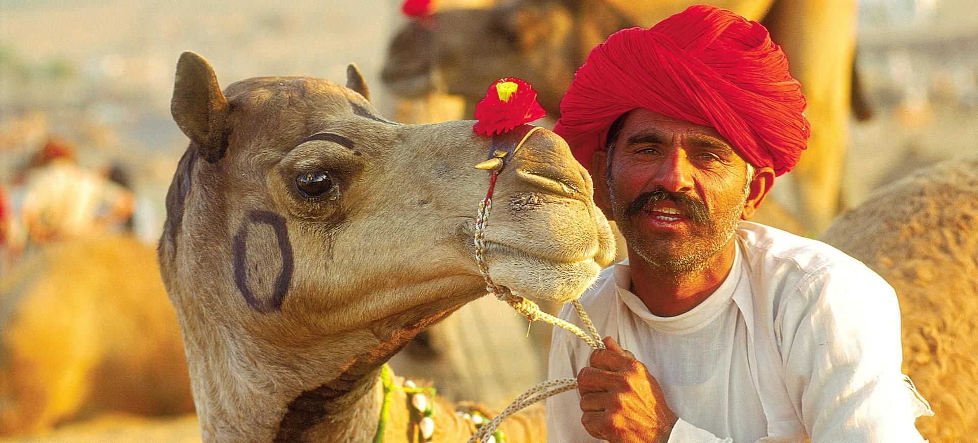 Un chameau pendant la foire de Pushkar au Rajasthan