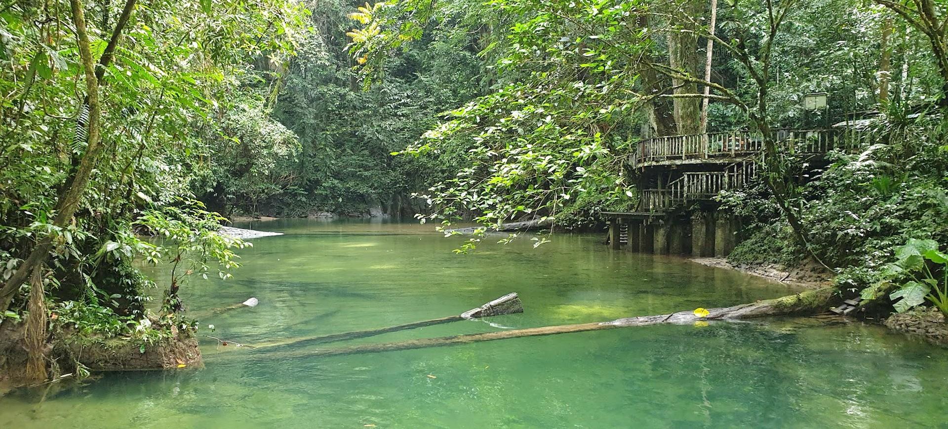 Malaisie Parc National du Gunung Mulu