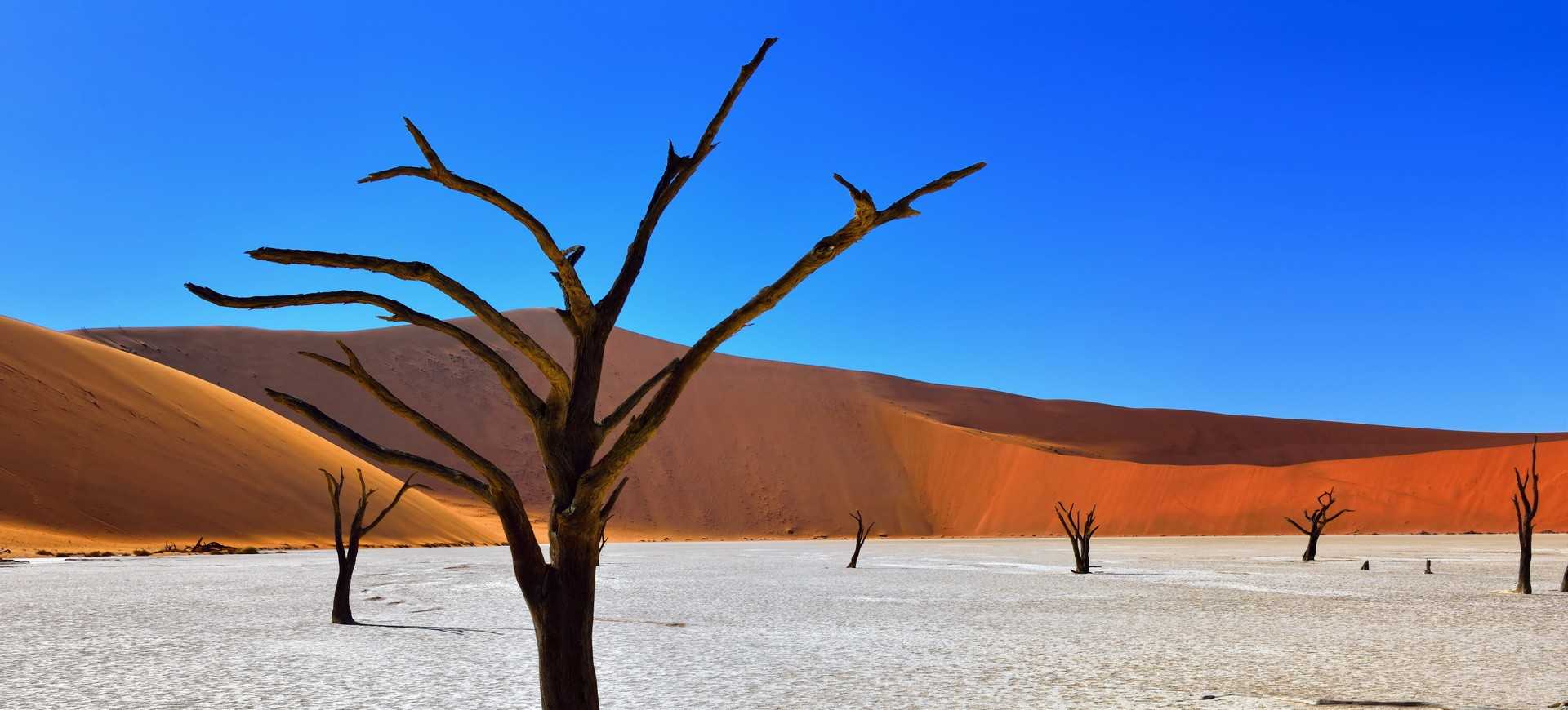 Namibie Désert du Namib