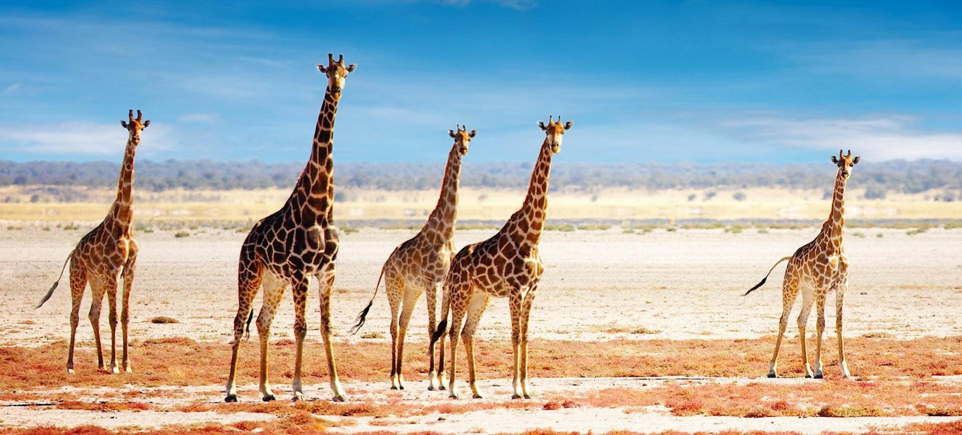 Estosha National Parc en Namibie