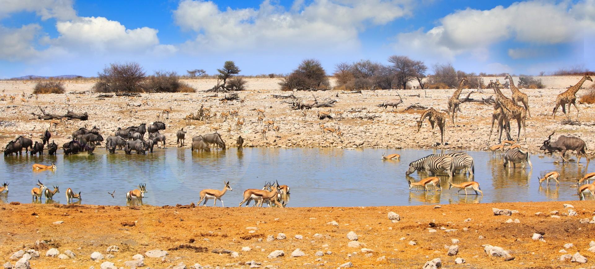 Namibie Parc d'Etosha
