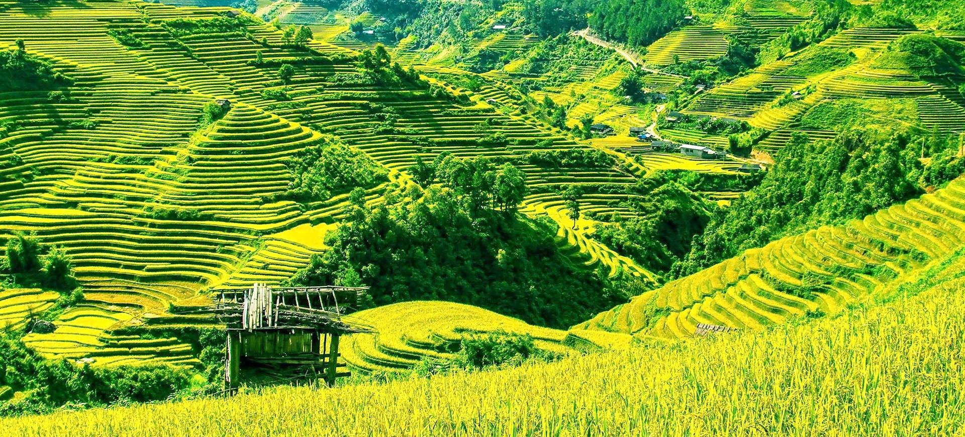 Rizières en Terresses à Sapa au Vietnam
