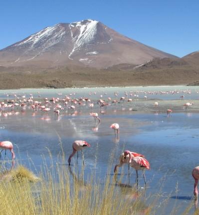 Paysages des Andes et le Désert du Sel
