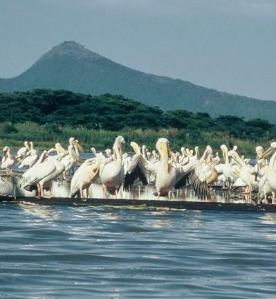 Ethiopie Réservre animaux Zèbres 001