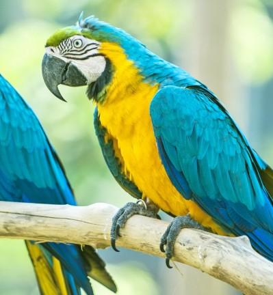 Peuple et nature sauvage de Bornéo