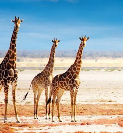 Parc d'Etosha et désert du Namib