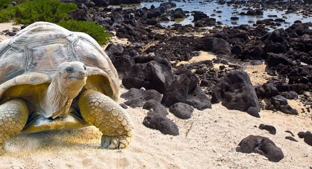 Archipel des îles Galápagos et les tortues géantes …